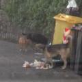 rifiuti-abbandonati-dragonea-(6)-dicembre-2013-vivimedia