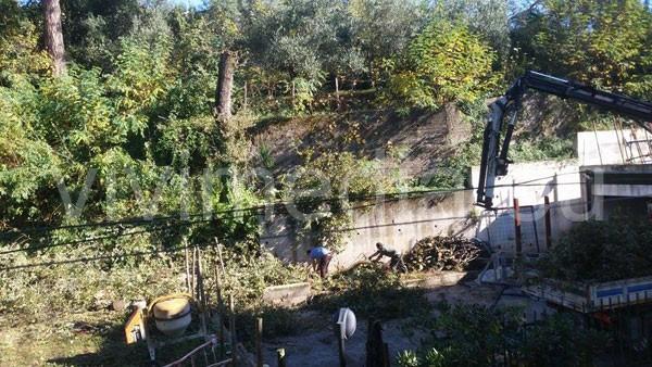 taglio-illegale-quercia-pubblica-1-via-galise-cava-de'-tirreni-novembre-2014-vivimedia