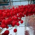 La cerimoniainaugurale colorata di rosso palloncino