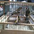 3-enpa-liberazione-uccelli-feriti-san-valentino-torio-marzo-2016-vivimedia