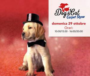 dog-e-cat-carpet-show-montecorvino-pugliano-ottobre-2017-vivimedia
