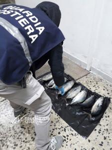 sequestro-tonno-rosso-pesce-spada-guardia-costiera-salerno-ottobre-2017-vivimedia
