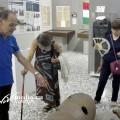 05-museo-dello-sbarco-salerno-agosto-2018-vivimedia